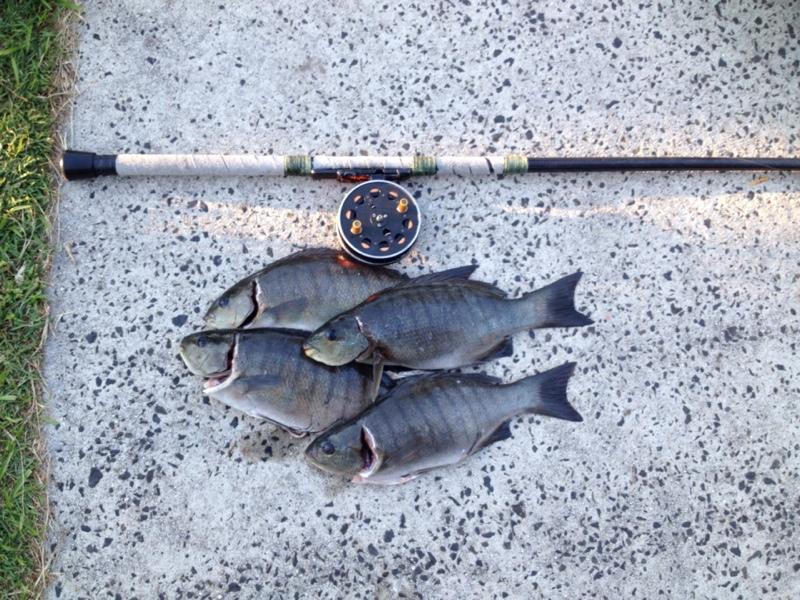 19/4/2014 Yamba T-Piece Blackfish